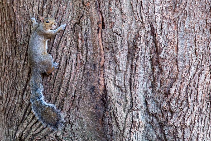 2019 Squirrels-0919 Backyard-EC4A4706
