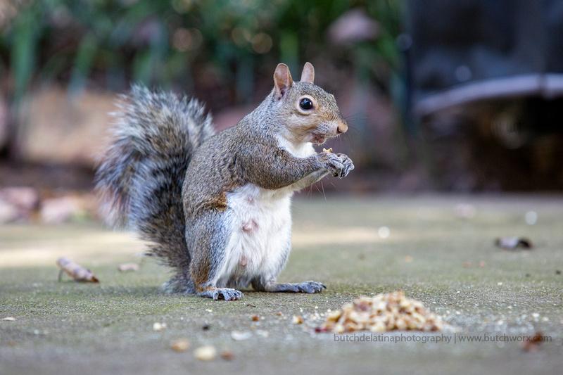 2019 Squirrels-0919 Backyard-EC4A4715