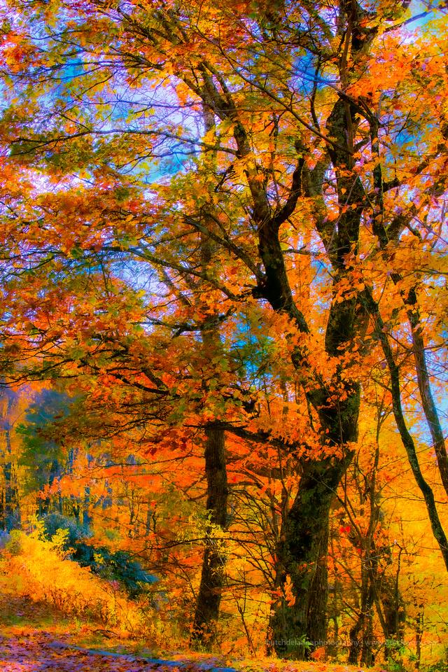 191101 Blue Ridge Parkway-Fantasy-EC4A6679
