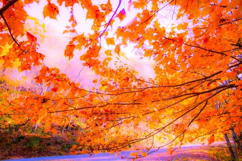 191101 Blue Ridge Parkway-Fantasy-EC4A6671